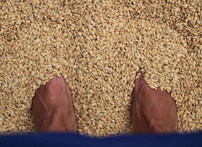 tastarros-valencia-rijstfestival