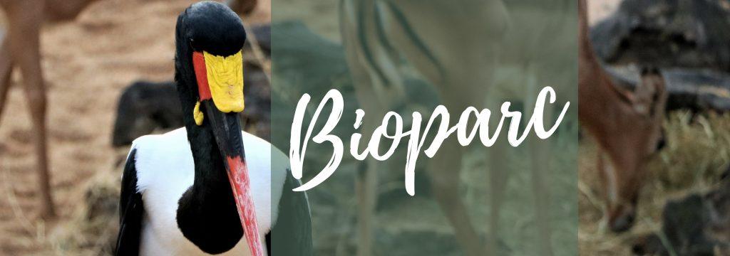 Tickets-Bioparc-Valencia