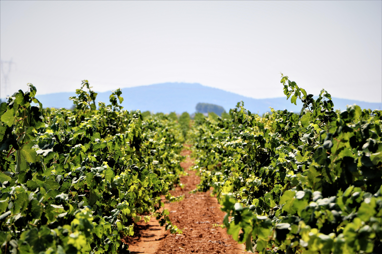 wijnproeverij-valencia